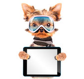 Perro vestido como esquiador con PC de la tableta Imagenes de archivo