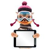 Perro vestido como esquiador con PC de la tableta Imagen de archivo