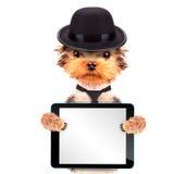Perro vestido como gángster de la mafia con PC de la tableta Fotos de archivo