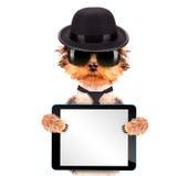 Perro vestido como gángster de la mafia con PC de la tableta Imagenes de archivo