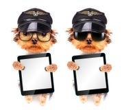 Perro vestido como piloto con PC de la tableta Fotografía de archivo