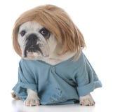 Perro vestido como un veterinario Imagen de archivo