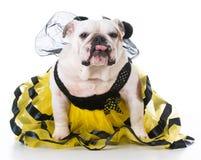 Perro vestido como una abeja Imágenes de archivo libres de regalías