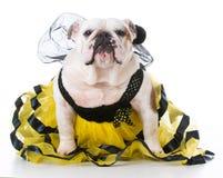 Perro vestido como una abeja Imagen de archivo