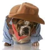 Perro vestido encima como de vaquero imagen de archivo libre de regalías