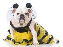 Perro vestido para arriba como una abeja Fotos de archivo libres de regalías