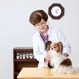 Perro veterinario de los examins. Imagen de archivo libre de regalías