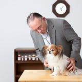 Perro veterinario de los examins. Imagenes de archivo