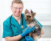 Perro veterinario de Yorkshire que se sostiene Terrier en las manos Imagen de archivo