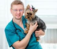 Perro veterinario de Yorkshire que se sostiene Terrier en las manos Fotos de archivo libres de regalías