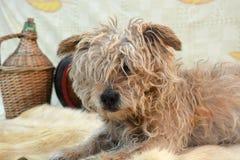 Perro viejo con el backround del otoño Imagen de archivo libre de regalías