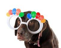 Perro viejo del cumpleaños Fotografía de archivo