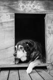 Perro viejo en perrera fotografía de archivo libre de regalías