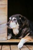 Perro viejo en perrera imágenes de archivo libres de regalías