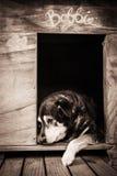 Perro viejo en perrera fotos de archivo libres de regalías