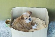 Perro viejo en una caja del cartón Imagen de archivo