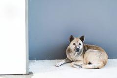 Perro viejo que descansa sobre el piso Fotos de archivo