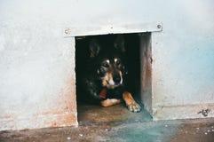 Perro viejo triste que miente en refugio para animales Imagenes de archivo
