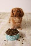 Perro y alimento hambrientos. Fotos de archivo libres de regalías