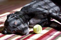 Perro y bola foto de archivo