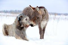 Perro y burro fotos de archivo libres de regalías