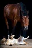 Perro y caballo Fotografía de archivo libre de regalías
