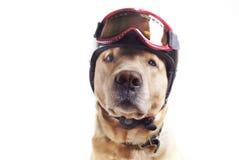 Perro y casco Fotografía de archivo libre de regalías