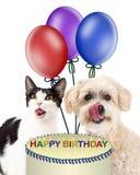 Perro y Cat Eating Birthday Cake Fotografía de archivo libre de regalías