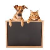 Perro y Cat Over Blank Sign foto de archivo