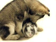 Perro y conejo Imágenes de archivo libres de regalías