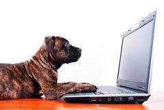 Perro y cuaderno Imágenes de archivo libres de regalías