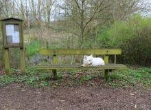 Perro y cubo de la basura blancos en bosque Imagen de archivo