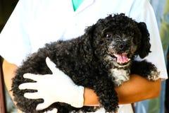 Perro y doctor Imagenes de archivo