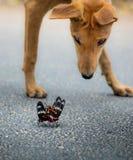 Perro y dos mariposas Imagenes de archivo
