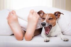 Perro y dueño el dormir Fotos de archivo