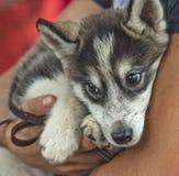 Perro y el dueño. Imagen de archivo libre de regalías