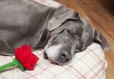 Perro y flor Imagen de archivo libre de regalías