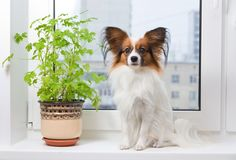Perro y flor en ventana Fotografía de archivo