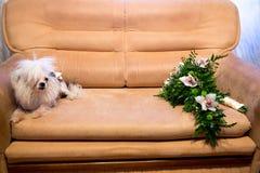 Perro y flores Foto de archivo libre de regalías