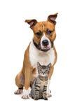 Perro y gatito Fotografía de archivo libre de regalías