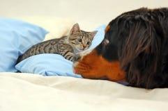 Perro y gatito imagen de archivo libre de regalías