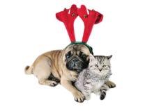 Perro y gatito de la Navidad Foto de archivo libre de regalías