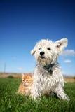 Perro y gatito en césped Imagen de archivo libre de regalías
