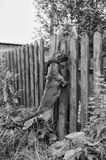 Perro y gato Fotos de archivo