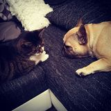 Perro y gato Foto de archivo