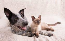 Perro y gato adorablemente lindos junto en una manta suave Imagenes de archivo