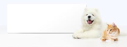 Perro y gato con la bandera en blanco aislada en el fondo blanco fotos de archivo