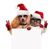 Perro y gato con los fingeres de la paz en sombreros rojos de la Navidad Imagenes de archivo