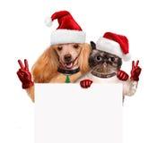 Perro y gato con los fingeres de la paz en sombreros rojos de la Navidad Foto de archivo libre de regalías