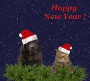 Perro y gato del Año Nuevo fotos de archivo